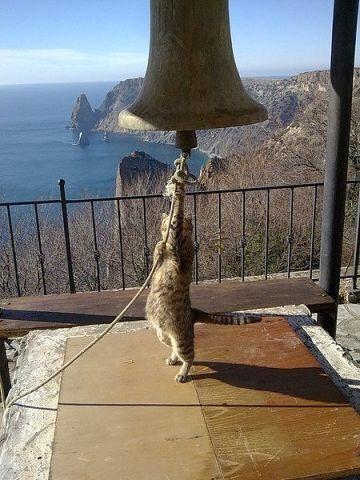 Афонский котейка.