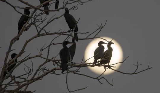 Истинная любовь сказывается в несчастье. Как огонек, она тем ярче светит, чем темнее ночная мгла...