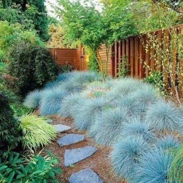 Сбор заказов. Декоративные растения с частого хозяйства Gardenia, украшение для Вашего сада. Акции, подарки всем!