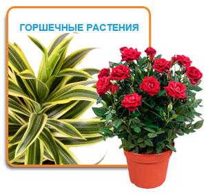 Сбор заказов. Комнатные горшечные растения. Новый ассортимент, Удобный выбор, отличные цены!