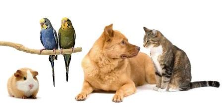 Сбор заказов. 3 дня! Мультизакупка. Зоотовары. Товары для грызунов Little One , птиц Ri0, Jr Farm, Аксессуары для собак