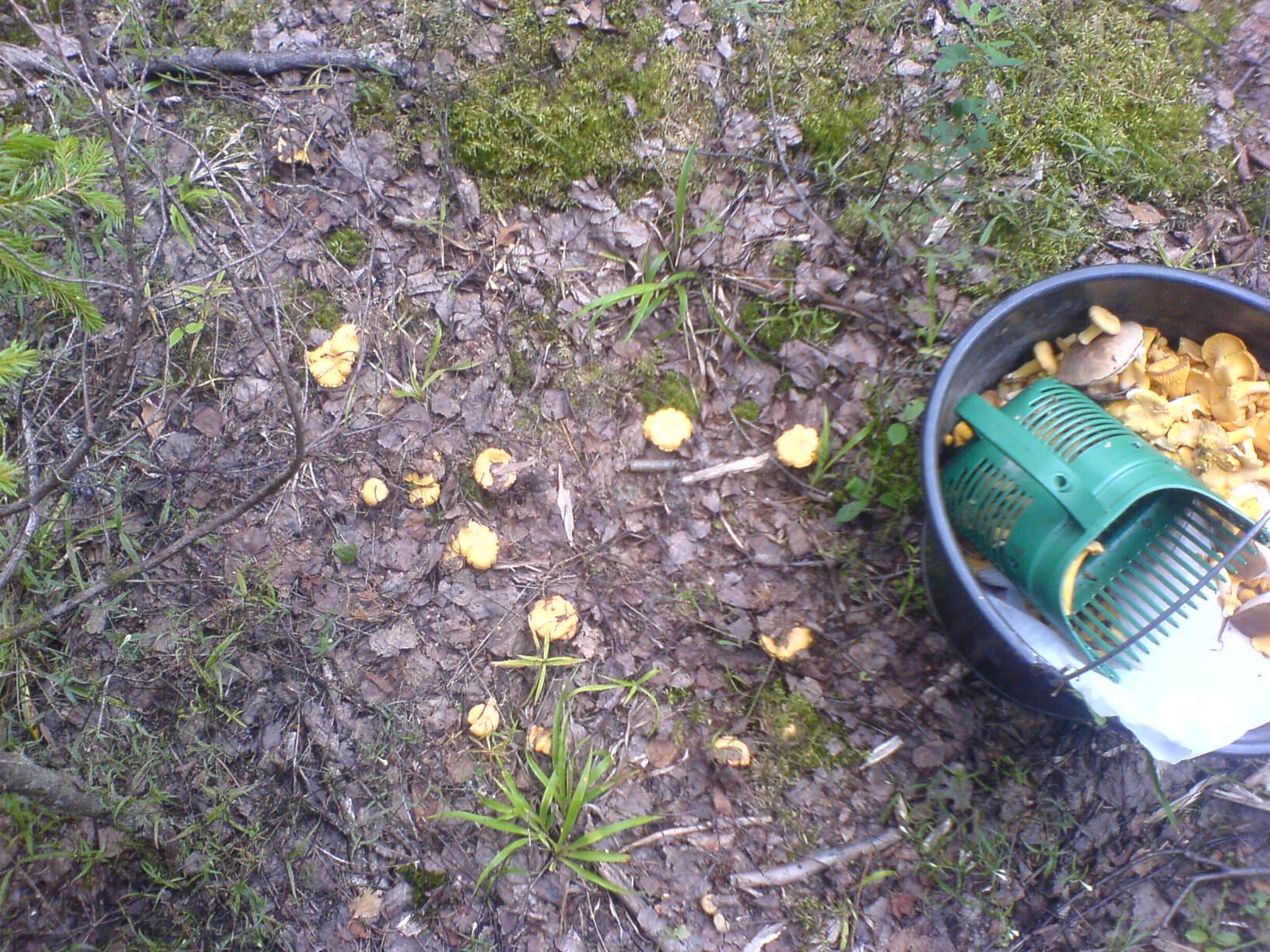 Сегодня все-таки вырвался за грибами. Удачно.
