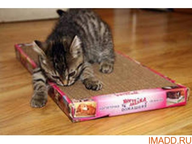Сбор заказов. Когтеточка лежанка. Когтедралка домашняя для котов, кошечек и котят. Решение всех проблем с ободранной мебелью, коврами, обоями.Напрямую от производителя по самым доступным ценам. Выкуп 4