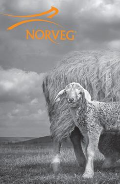 Сбор заказов. Премиум термобелье Norv!eg. Сделано в Германии - 02.