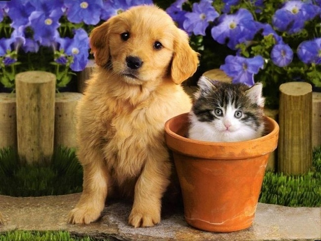 Спреи от пятен и запаха домашних животных. Удаляют неприятные запахи и дезинфицируют! Выкуп 2