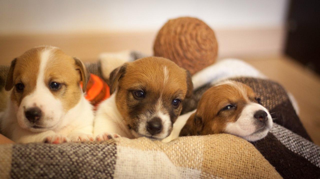 очень милые щенки!