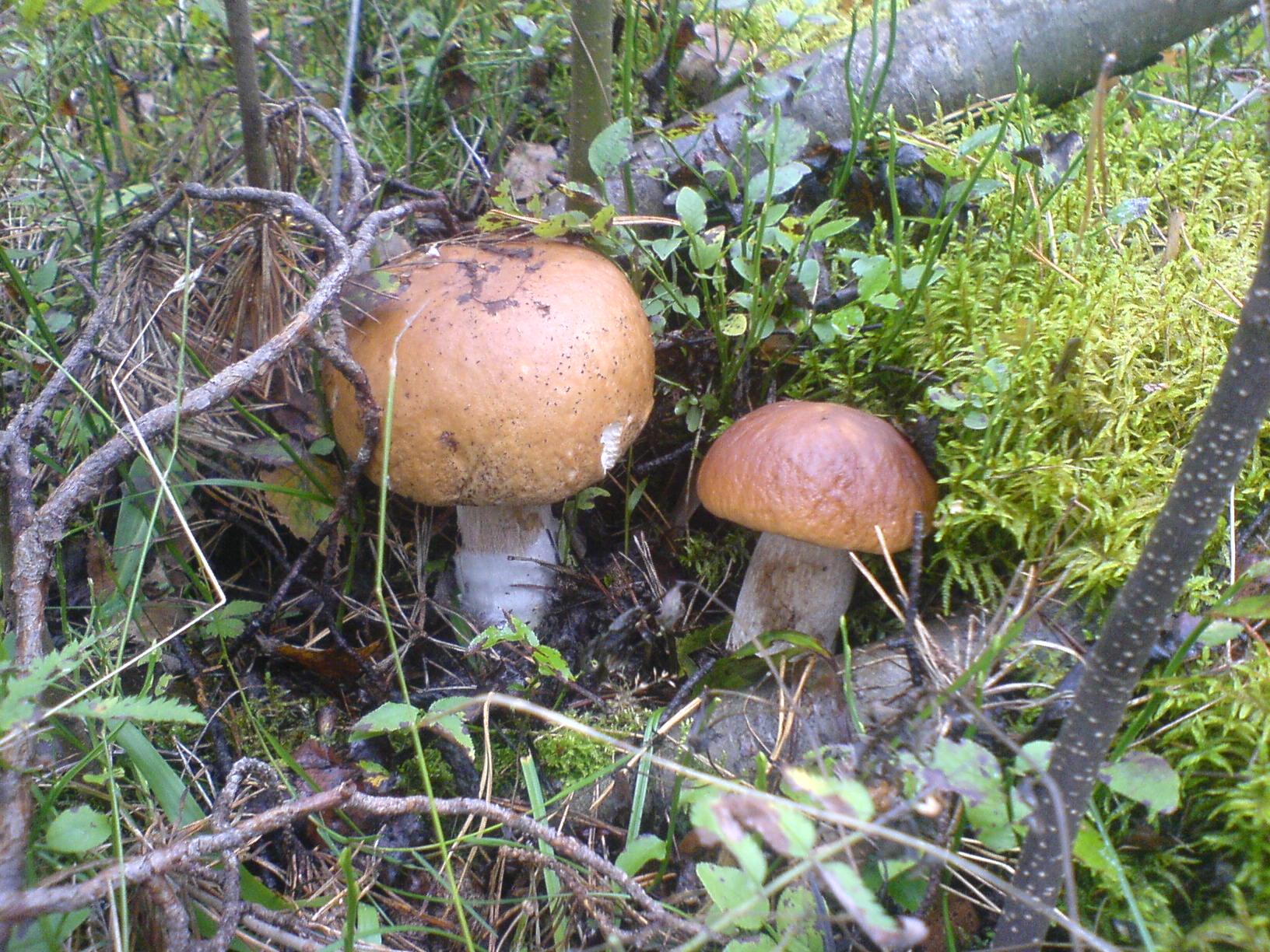 Сегодня снова ездили по грибы.