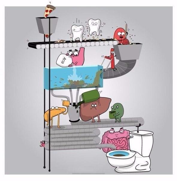 Комикс об устройстве нашего организма