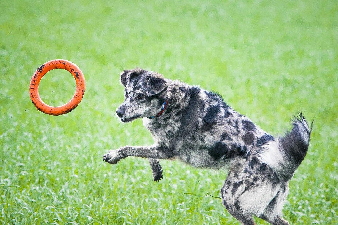 Доглайк - любимая игрушка вашей собаки! Сентябрь