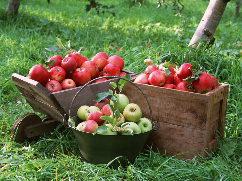 Экспресс-сбор. Яблони колоновидные и плодово-ягодные кустарники-4. Предзаказ на весну 2017г