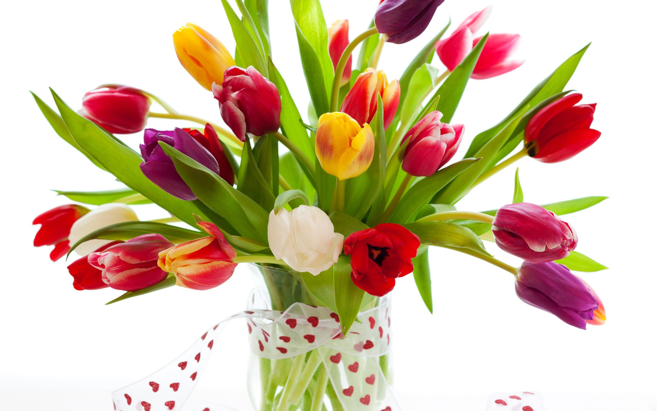 Тюльпаны Тюльпаны Тюльпаны ПОСАДКА и УХОД