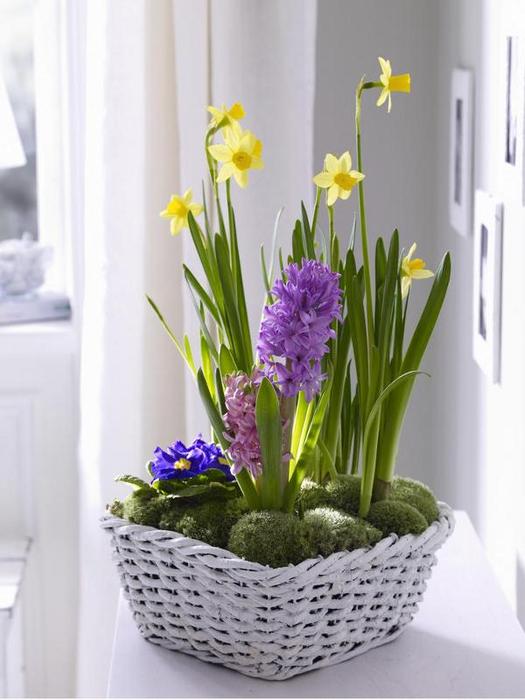 Супер-распродажа! Сортовые тюльпаны, нарциссы, крокусы, гиацинты по лучшей цене! Без рядов!