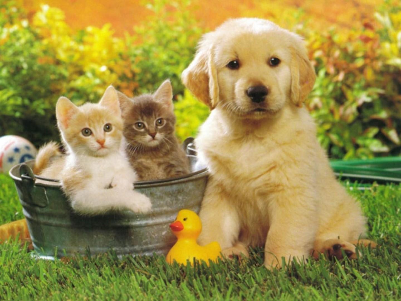 Сбор заказов. Спреи от пятен и запаха домашних животных. Удаляют неприятные запахи и дезинфицируют! Выкуп 3