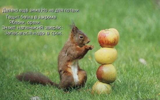 Сбор заказов. Орехи, сухофрукты, семечки - природные витамины спешат на помощь!-8