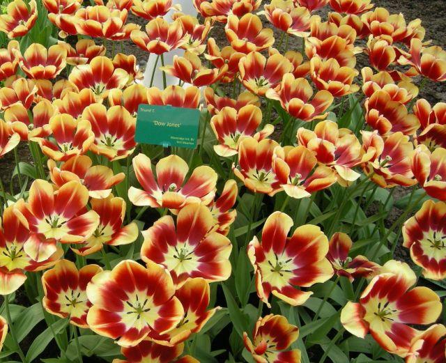 Сбор заказов Семена РуССкий огород - 3. Распродажа семян петуньи, луковиц тюльпанов, газонов - сидератов, универсальных и цветущих. Много семян в наличии.