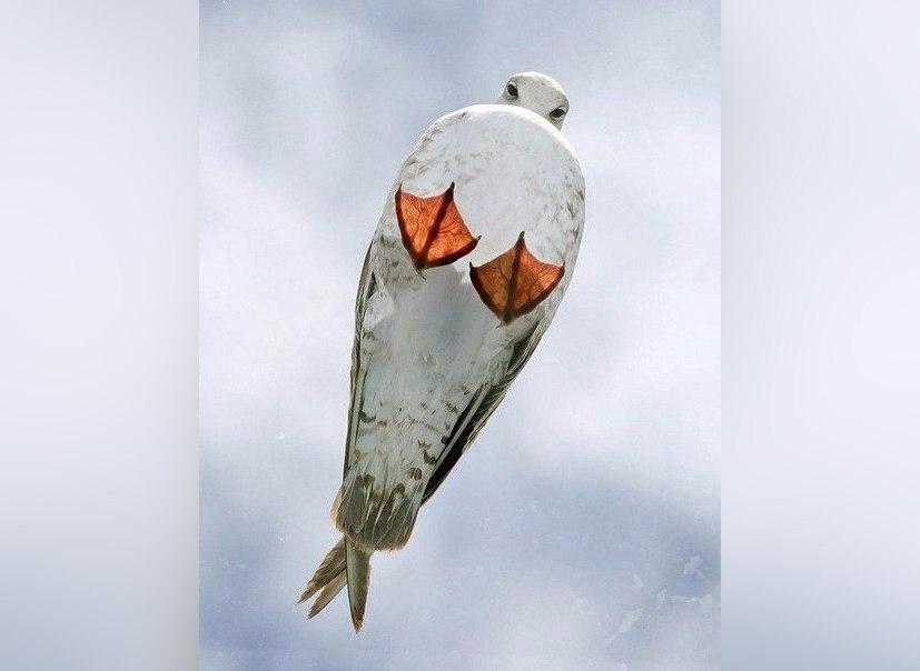 Чайка. Вид снизу