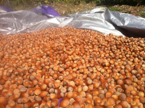 Сбор заказов. Орехи из Сочинского национального парка. Чернослив, курага, черный изюм, шиповник и многое другое. Все свежее и очень вкусное!