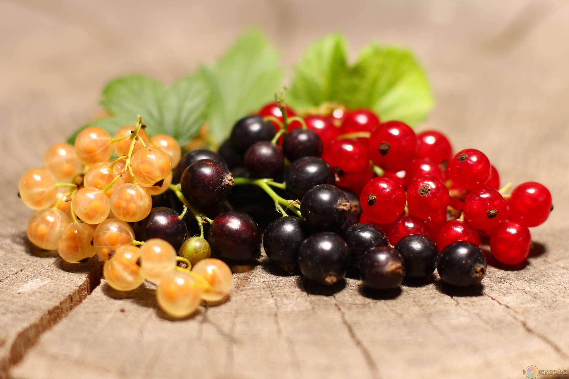 Костная мука-незаменимое органическое удобрение для смородины!