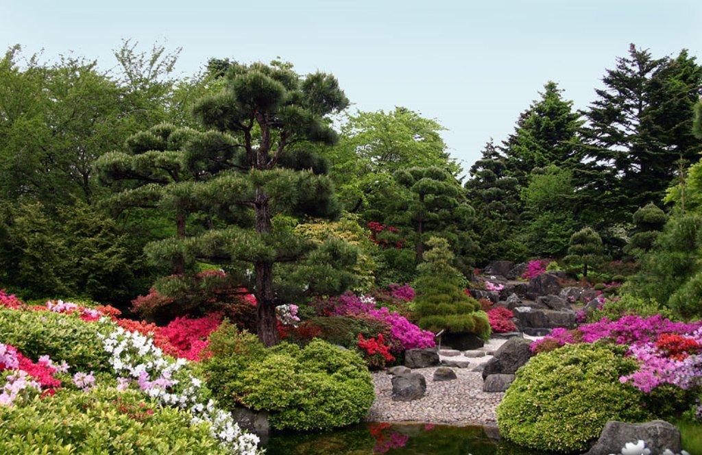 Декоративные, хвойные, ягодные кустарнички КолорЛайн. Предзаказ на весну 2017г