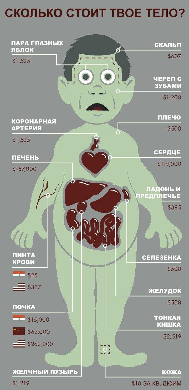 Сколько стоит тело человека