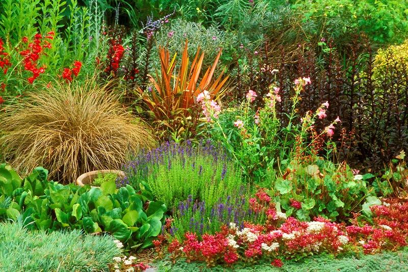 Цветочный беспредел - огромный выбор луковичных и многолетников на весну. Удивительное предложение от поставщика - отказаться невозможно!