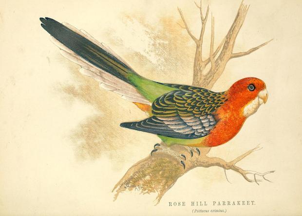Палеонтологи нашли первого сибирского попугая