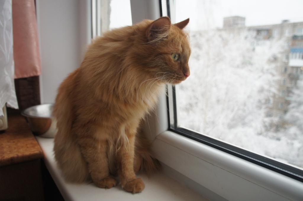 Зимний кот Боунс-Маккой
