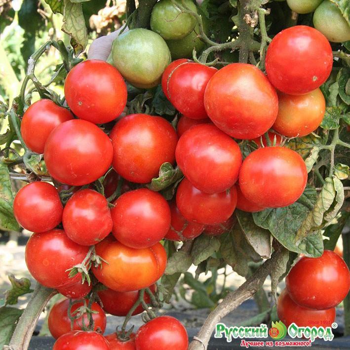 Новинки - пристрой семян серии Северные овощи - самое раннее созревание, удивительная холодостойкость и устойчивость к болезням. Серия семян Русский размер, например, горох вдвое больше обычного. И много все ещё