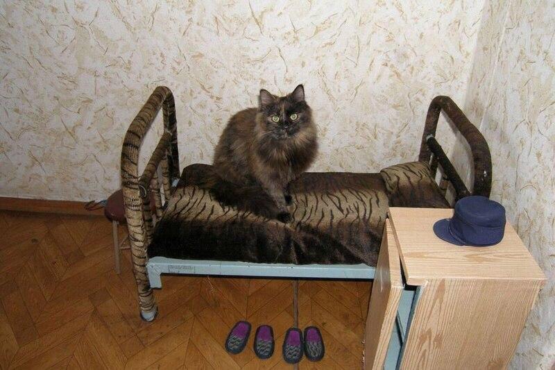 Бродяга-кот и его шконка