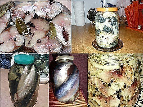 12 Рецептов домашнего посола скумбрий, сельди, кильки и мойвы!!!