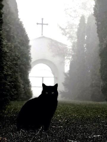Верному коту