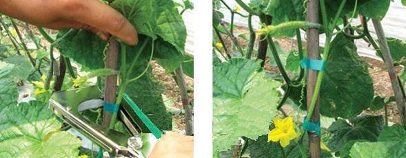 Сбор заказов РуCCкий огород 14: Распродажа Фитоламп для рассады LED. Степлер для подвязывания, прививочный секатор, кокосовые таблетки, окраска гортензий, полив для подвесных кашпо, ножницы поворотные для травы и нарезки зелени с 5 лезвиями.Новинки