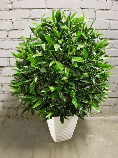 Оформление интерьера изысканными и красивыми растениями! Экспресс сбор!-17