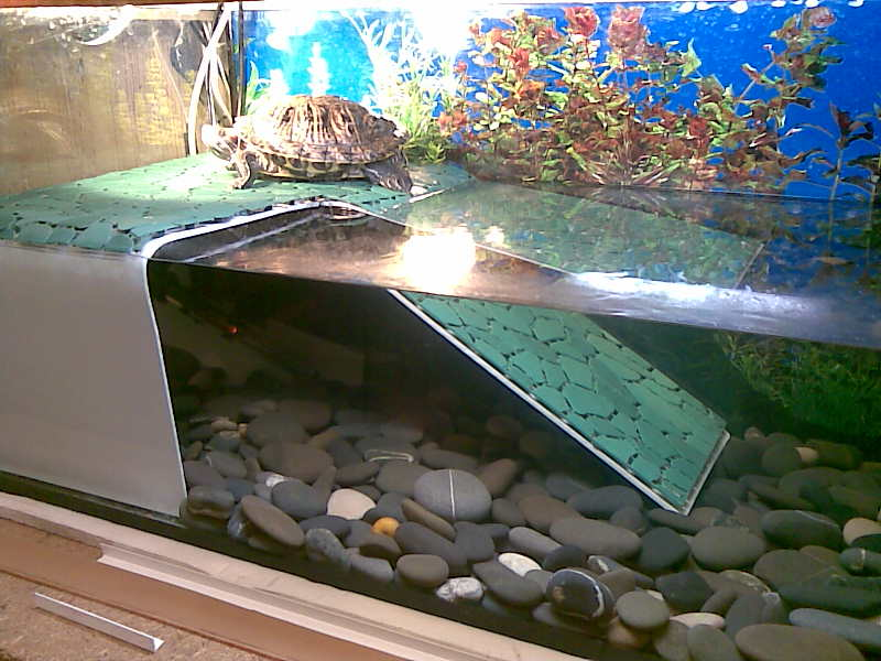 Аквариум черепах своими руками фото