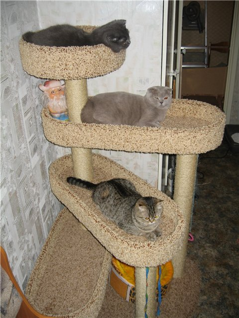 Кошки дома своими руками