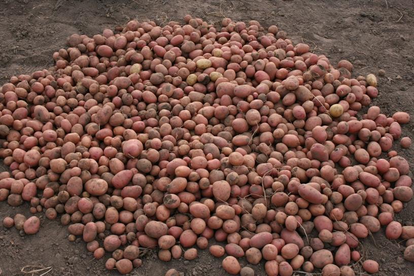 Окучники для картофеля к трактору: цена, видео