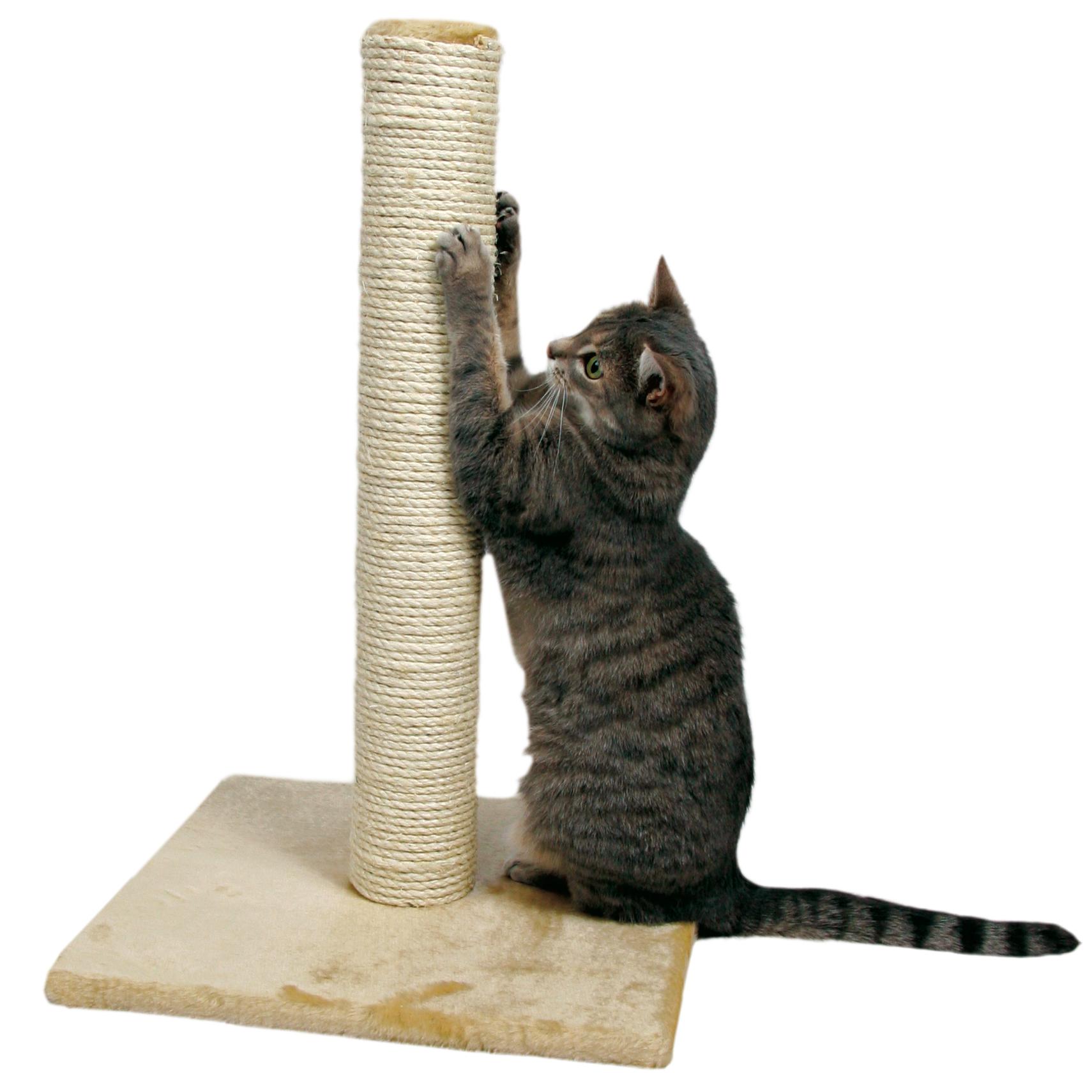 Домик для котенка с когтеточкой своими руками