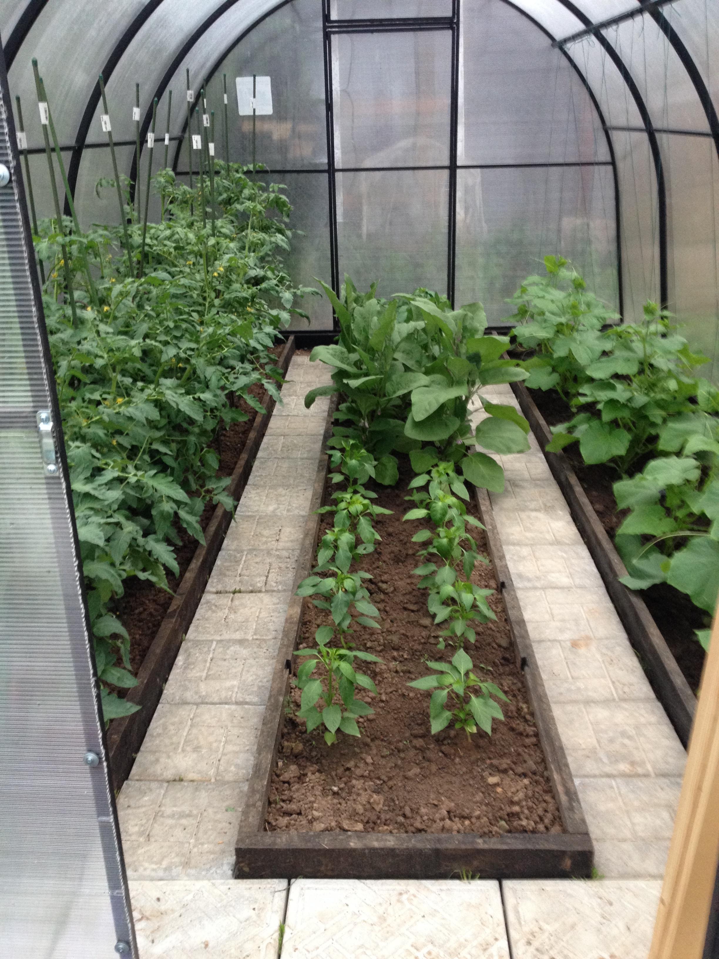 Огурцы : что можно посадить в одной теплице вместе с овощем 12