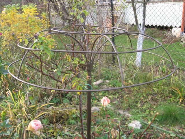 Опоры для штамбовых роз своими руками фото 95