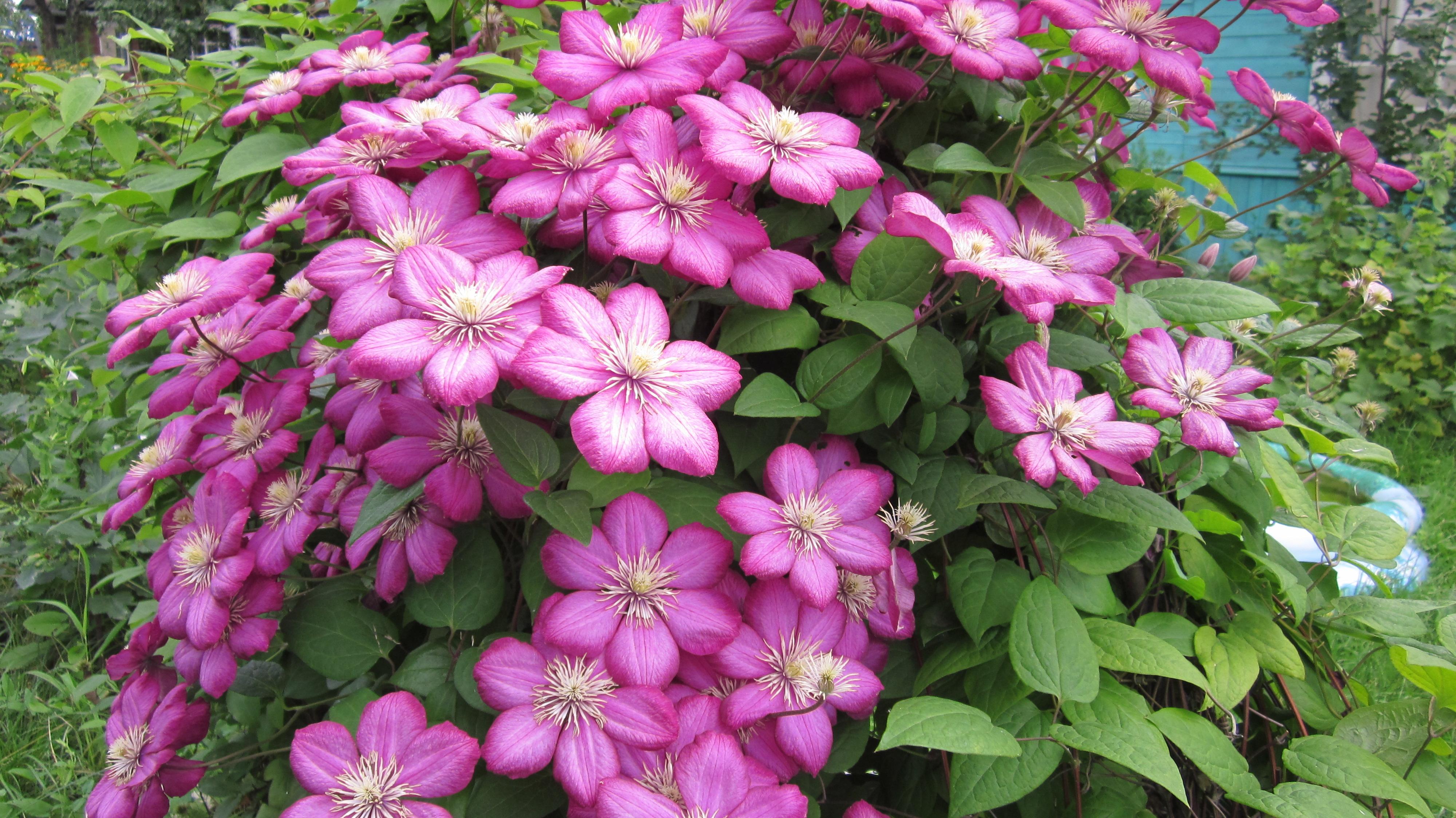 Каталог многолетние цветы цветущие все лето фото и название для сибири
