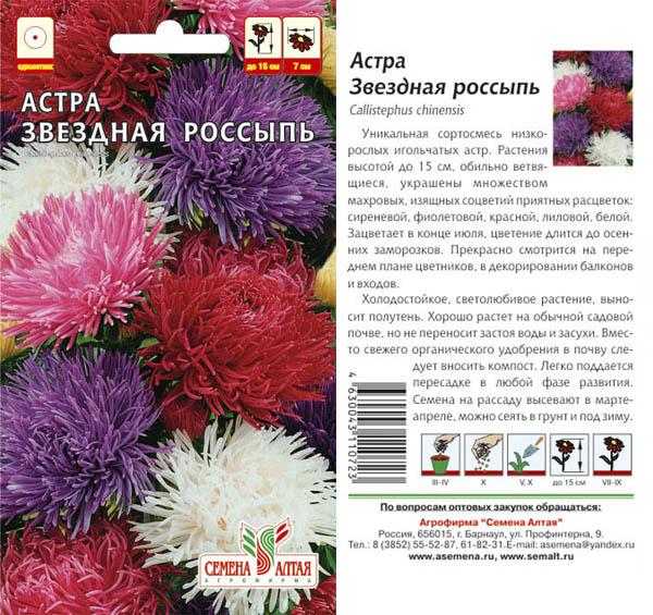 Цветы астра описание