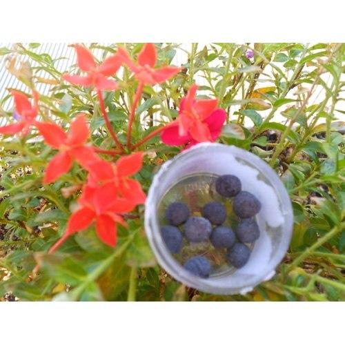 suzhenie-vlagalisha-limonom