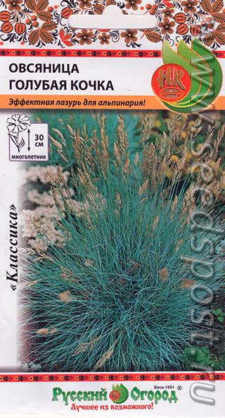 Овсяница выращивание из семян в домашних условиях фото