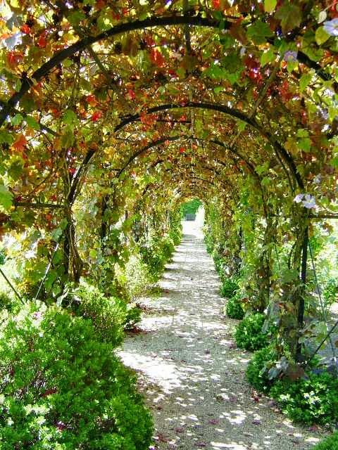 Как сделать арку для винограда во дворе - Mmrr.ru