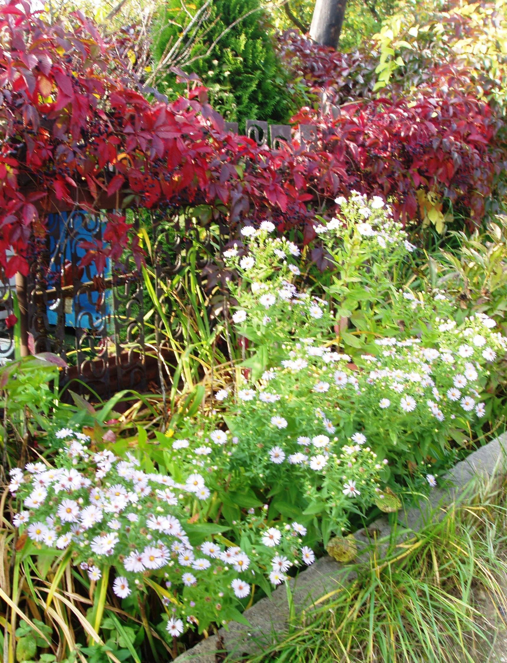 Фото многолетних цветов осени