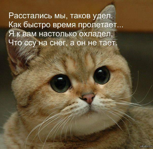proshay-pizdabol-ne-skuchay