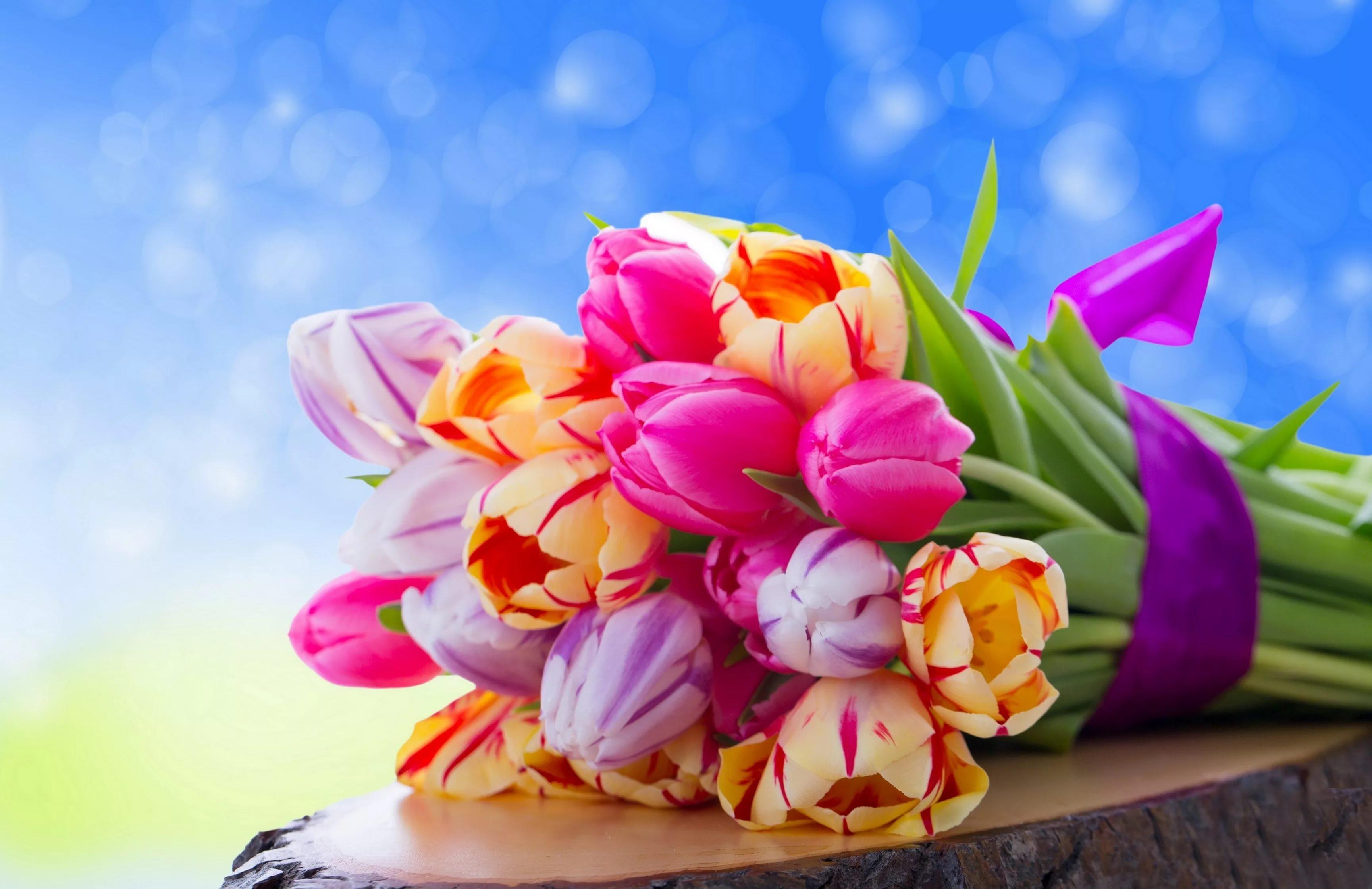 Поздравления первым, весенние картинки с 8 марта красивые