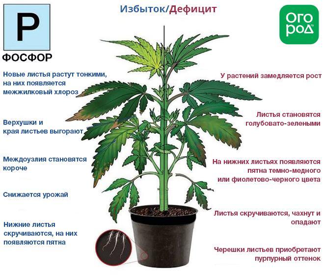 Избыток азота в марихуане статья за культивирование марихуаны
