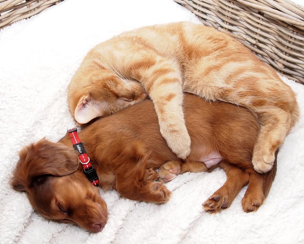Прикольные картинки о кошках и собак