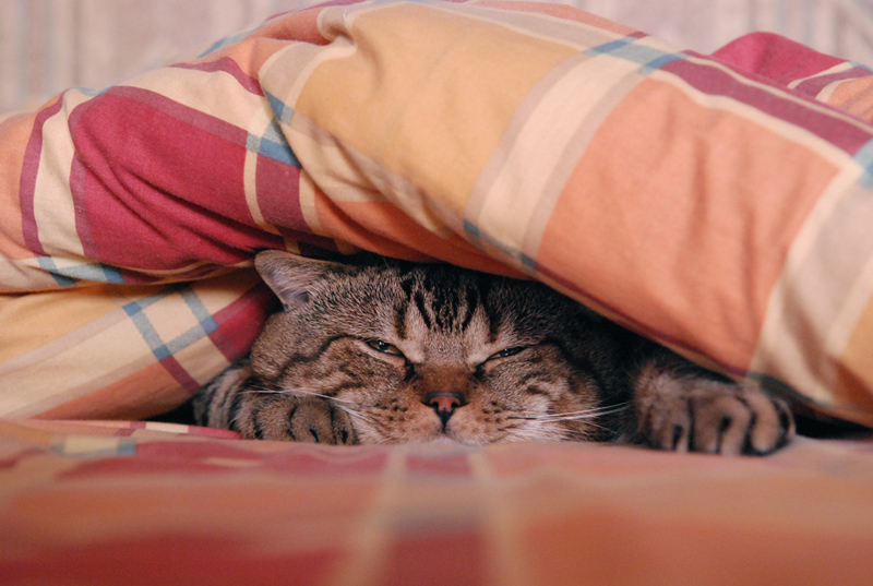 Фото с кошкой и надписью понедельник день тяжелый